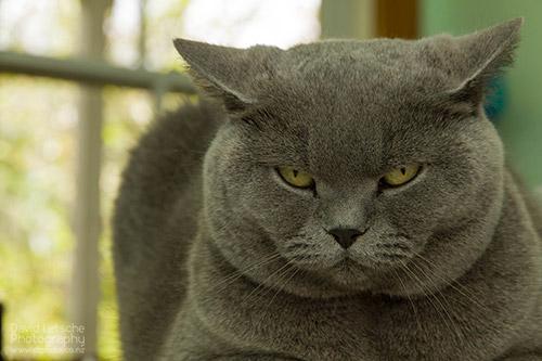 Intense cat!